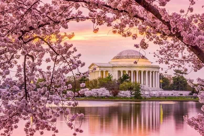 2021 Washington Dc Cherry Blossom Peak Bloom Forecasts
